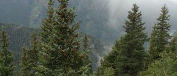 توانایی جذب دی اکسید کربن به وسیله جنگل ها محدود است
